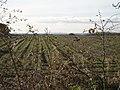 Bexton - Farmland.jpg