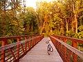 Bicycle Bridge - panoramio.jpg