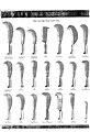 Bill Hooks 1939 Nash - Fussells catalogue.jpg