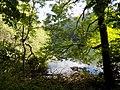 Biogradska gora - National Park, the oldest protected natural resource in Montenegro 12.jpg