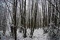 Birchett's Wood - geograph.org.uk - 1670650.jpg