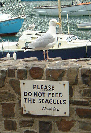 Pest control - Sign in Ilfracombe, England designed to help control seagull presence