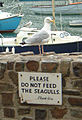 Birds-seagull-donotfeed-amoswolfe.jpg
