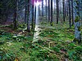 Black Forest (near Elztal) 4 (26398569658).jpg