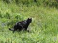 Black cat 1 (3).jpg