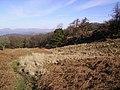 Blake Holme Plantation - geograph.org.uk - 342463.jpg