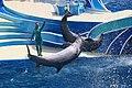 Blue Horizons Dolphin show (8793181651).jpg