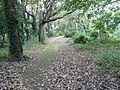 Boscombe, path through Shelley Park woodland - geograph.org.uk - 995534.jpg