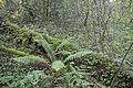 Bosque - Bertamirans - Rio Sar - 024.jpg