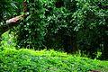 Bosque de La Habana 07.jpg