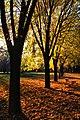 Botanic park-Bursa 2011 Autumn - panoramio.jpg