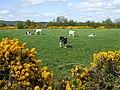Bracky Townland - geograph.org.uk - 787844.jpg