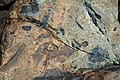Breccia (Shatter Zone, Late Devonian; Sand Beach, Mt. Desert Island, Maine, USA) 14.jpg