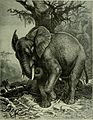Brehm's Life of animals - a complete natural history for popular home instruction and for the use of schools. Mammalia (1896) (20225601860).jpg