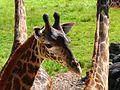 Brevard Zoo, Viera FL - Flickr - Rusty Clark (98).jpg