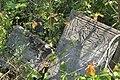 Briceni Jewish Cemetery 23.JPG