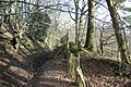 Bridleway, Highams Wood - geograph.org.uk - 317198.jpg
