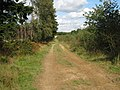 Bridleway through Hemsted Forest - geograph.org.uk - 989971.jpg