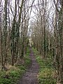Bridleway through woods - geograph.org.uk - 728070.jpg