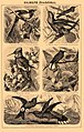 Brockhaus and Efron Encyclopedic Dictionary b30 678-2.jpg