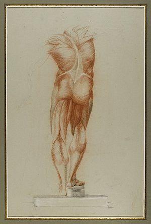 Figure study - Brooklyn Museum - Figure Study of Musculature - Daniel Huntington