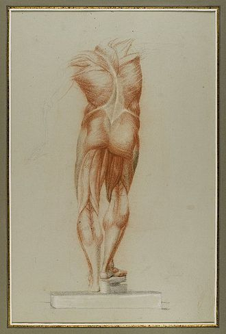 Figure study - Brooklyn Museum - Figure Study of Musculature - Daniel Huntington