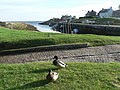 Brora, harbourside ducks - geograph.org.uk - 596928.jpg