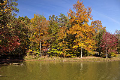 Lake shore view with orange, red, yellow, and green-leaved trees.
