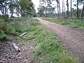 Brownhill Inclosure, New Forest - geograph.org.uk - 37795.jpg