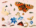Butterflies, Caterpillars, Other Insects, and Flowers by Jan van Kessel, 1659, High Museum of Art.jpg