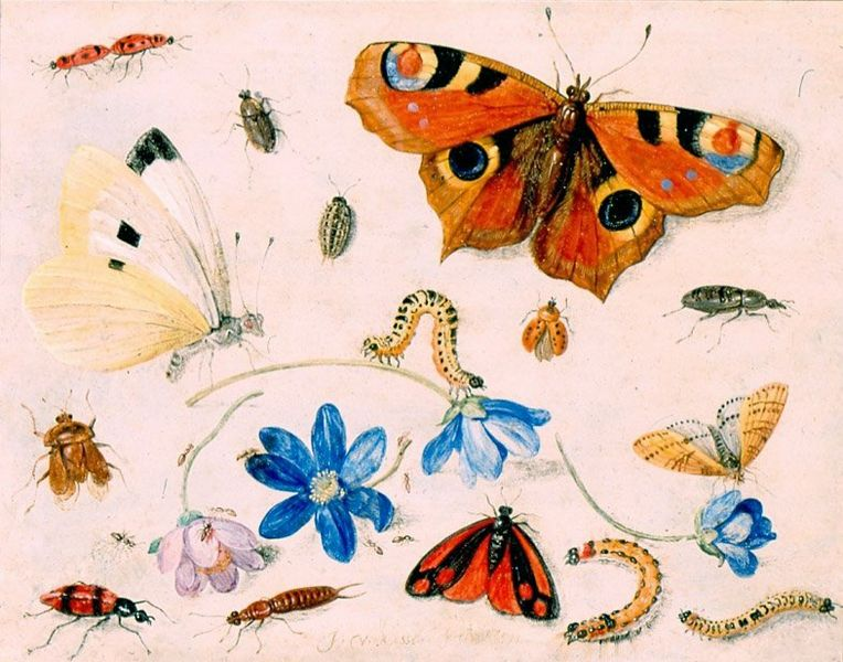 File:Butterflies, Caterpillars, Other Insects, and Flowers by Jan van Kessel, 1659, High Museum of Art.jpg