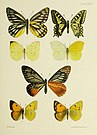 Butterflies from China, Japan, and Corea (1892) (20484569496).jpg