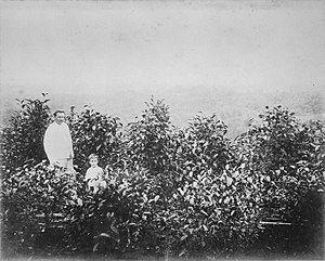 Coffee production in Indonesia - Coffee plantation in Dutch East Indies circa 1870–1900