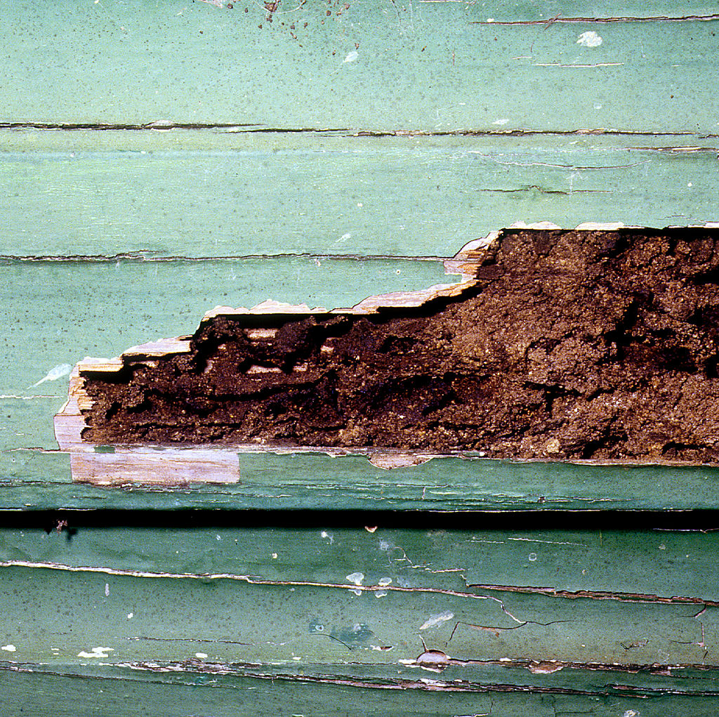 CSIRO ScienceImage 2185 Termite Damaged Weatherboard