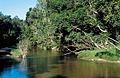 CSIRO ScienceImage 3726 Elphinstone Creek near Abergowrie QLD.jpg