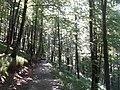 Camí de Lareo a Lizarrusti 20180802 121818.jpg