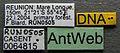 Camponotus aurosus casent0064815 label 1.jpg