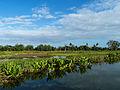 Canal des Pangalanes - viha.jpg