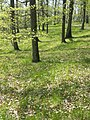 Carex praecox sl30.jpg