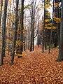 Carpathian forest Kiev.jpg