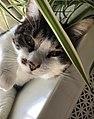Cat, domestic.jpg