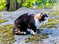 Cat Outside in Sweden-148884.jpg