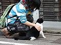 Cats (8174968626).jpg