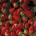 Chandler strawberries - USDA ARS - K7726-1.jpg
