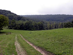 Forest of Argonne - Forest of Argonne in a valley near Chatel Chéhéry, France, where Sgt. Alvin C. York fought in World War I.