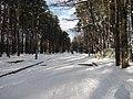 Chernihivs'kyi district, Chernihivs'ka oblast, Ukraine - panoramio (3).jpg