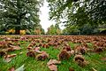 Chestnut lawn, Petworth.jpg