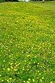 Cissbury Ring - geograph.org.uk - 1326780.jpg