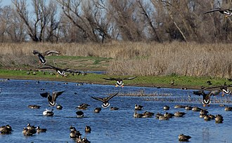 Colusa National Wildlife Refuge - Image: Colusa National Wildlife Refuge