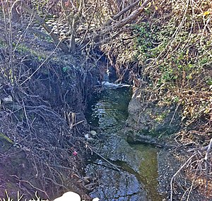Matadero Creek - Concretization of Matadero Creek's banks (in back of shot) accelerates stream flows, causing severe channel incision which is now threatening Page Mill Road below the Arastradero Road intersection Jan. 2011